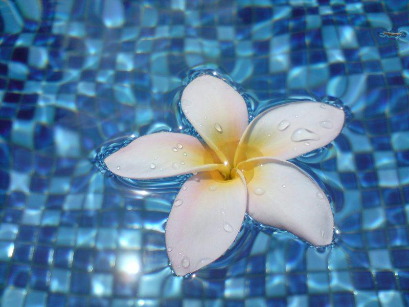 Co jest tak naprawdę celem terapii akceptacji i zaangażowania? – artykuł Sabiny Sadeckiej
